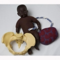 PELVIS & BROWN FETAL DOLL